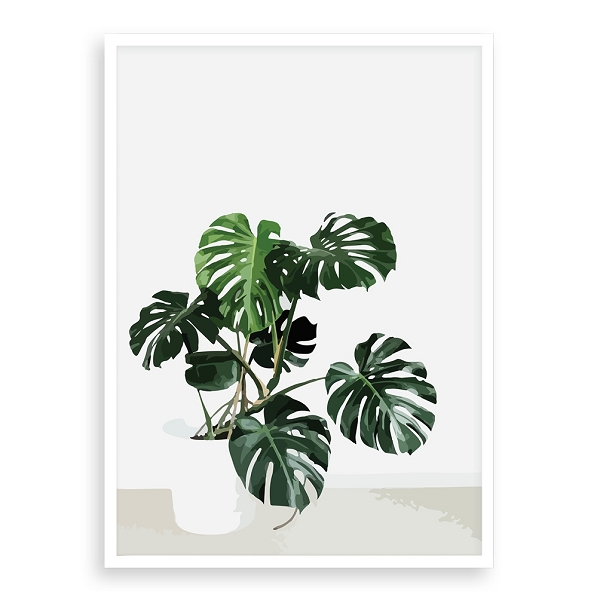 Monstera Pot Plant