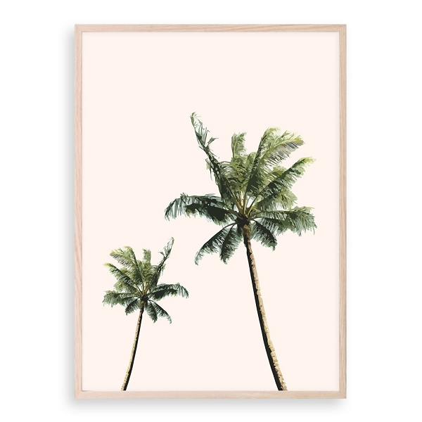 Peach Palm Trees